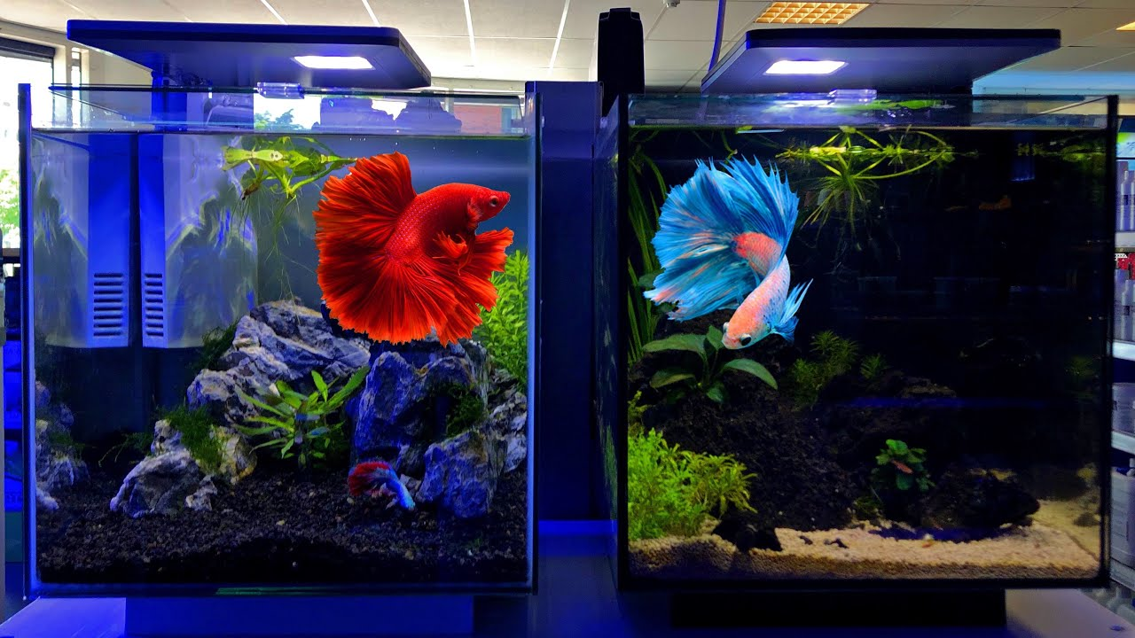 Best Betta Fish Tank